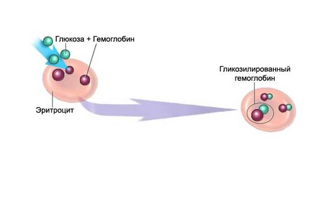Сочетание глюкозы с гемоглобином