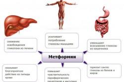 Механизм действия препарата Метформин