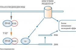 Механизм действия тиазолидиндионов