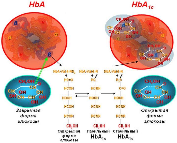 изменения гемоглобина