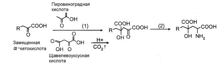 провиноградная-кислота