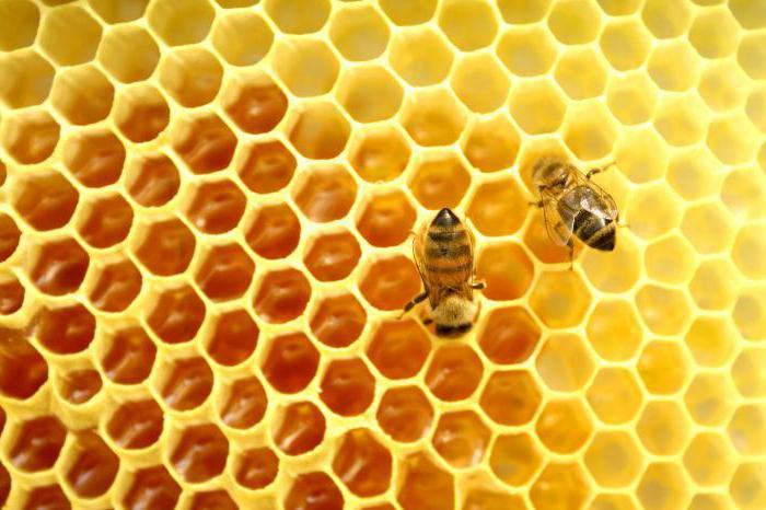 добавляют ли в мед сахар