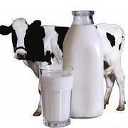 Коровье молоко при сахарном диабете