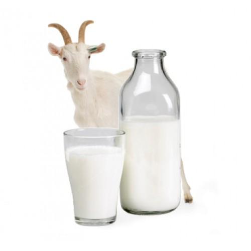 Козье молоко при сахарном диабете