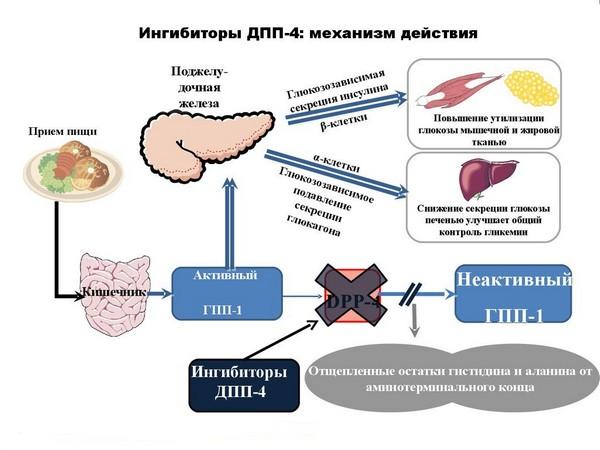 Ингибиторы ДПП-4